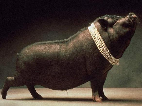 perolas-aos-porcos-frame
